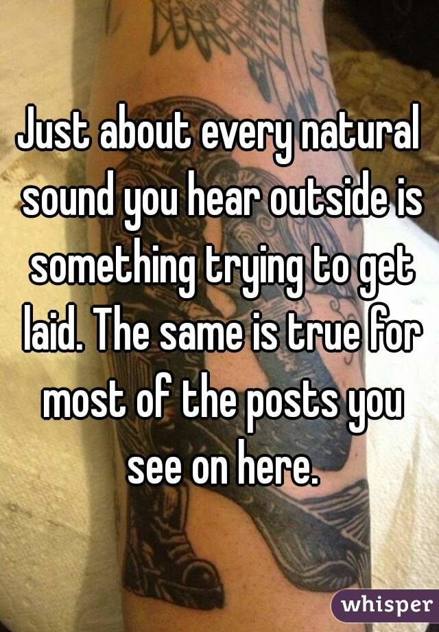 Just about every natural sound you hear outside is something trying to get laid. The same is true for most of the posts you see on here.