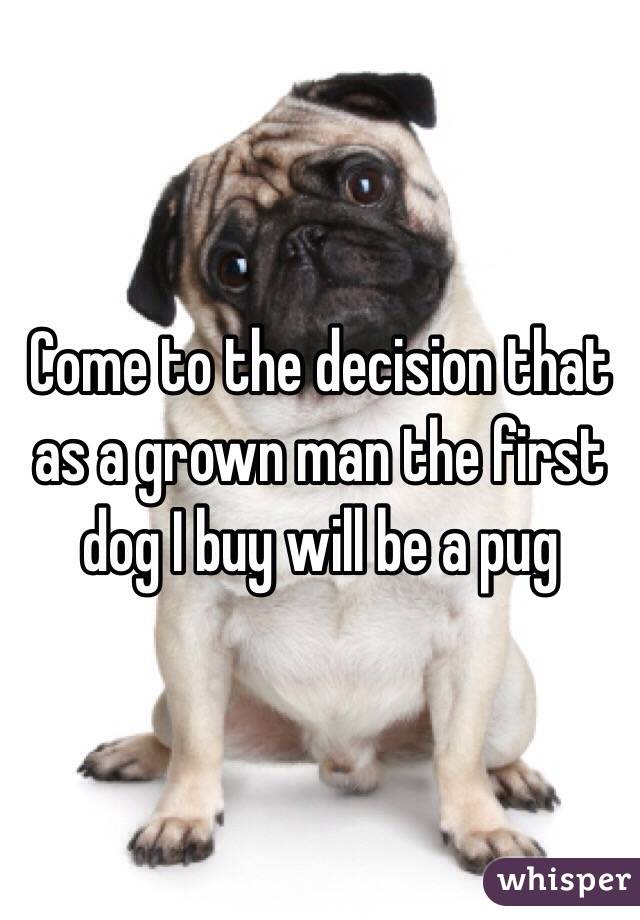 Come to the decision that as a grown man the first dog I buy will be a pug