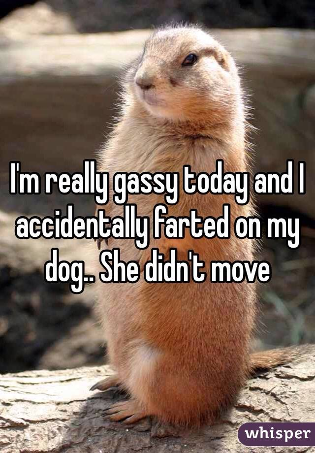 I'm really gassy today and I accidentally farted on my dog.. She didn't move