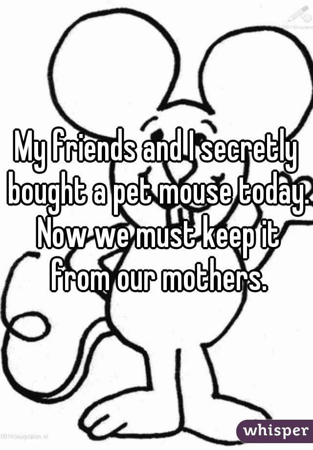 My friends and I secretly bought a pet mouse today. Now we must keep it from our mothers.