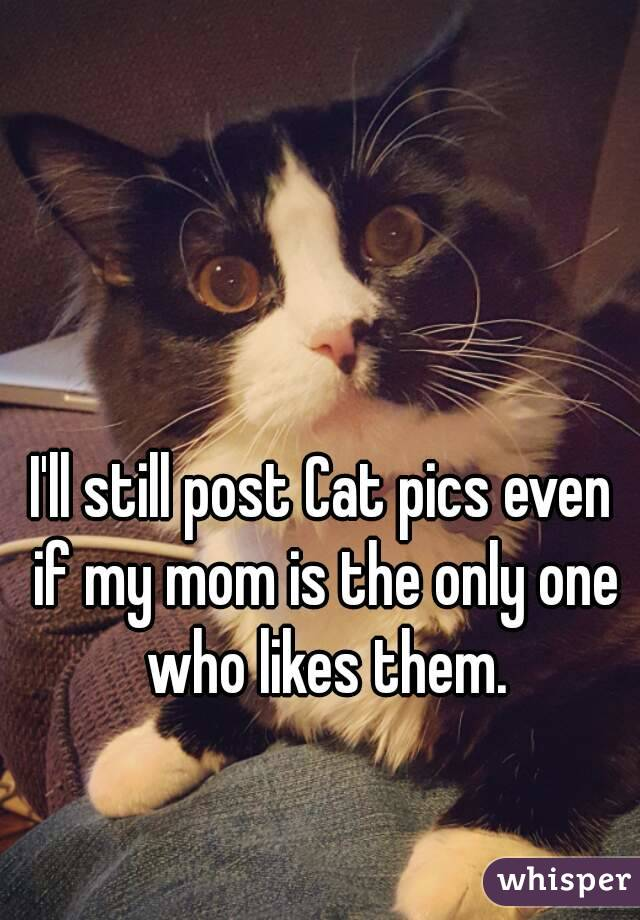 I'll still post Cat pics even if my mom is the only one who likes them.