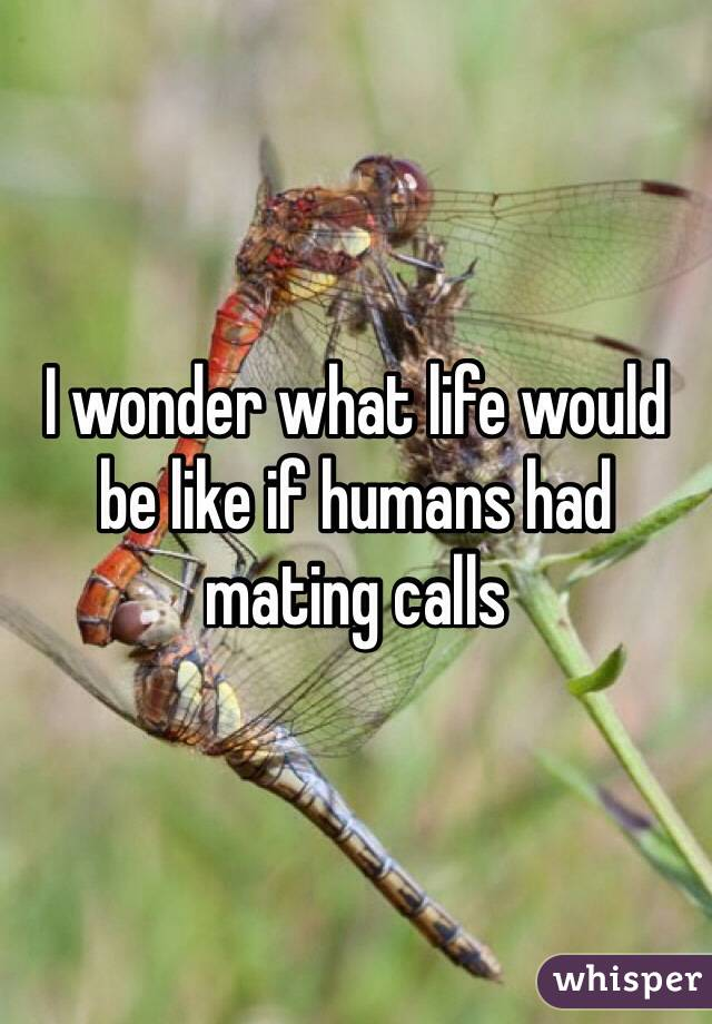 I wonder what life would be like if humans had mating calls