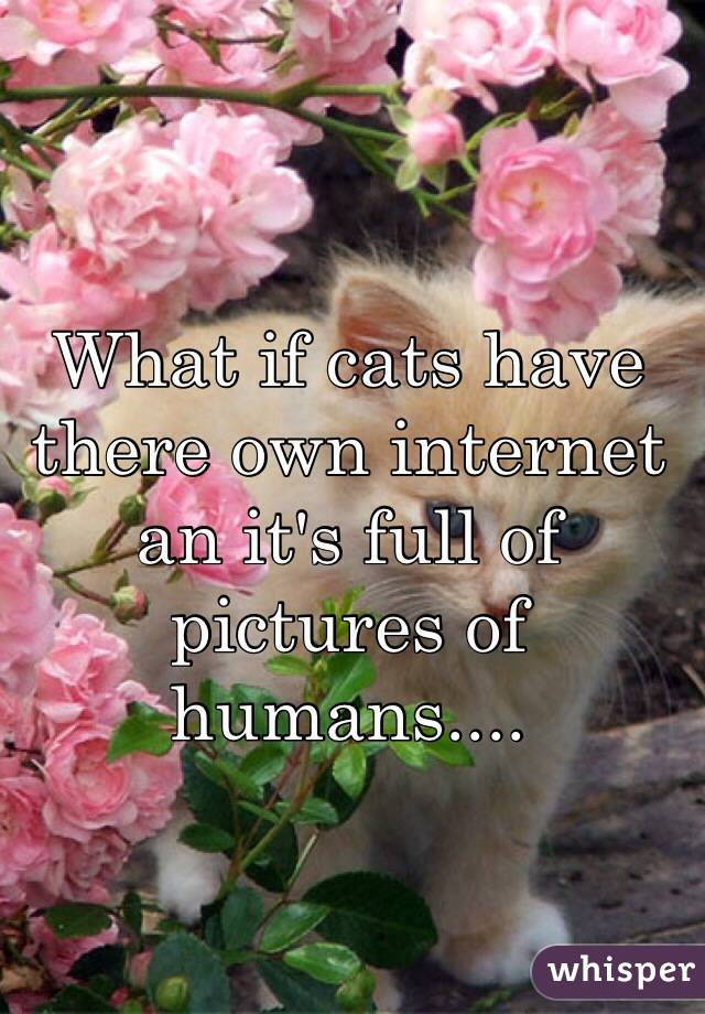 What if cats have there own internet an it's full of pictures of humans....