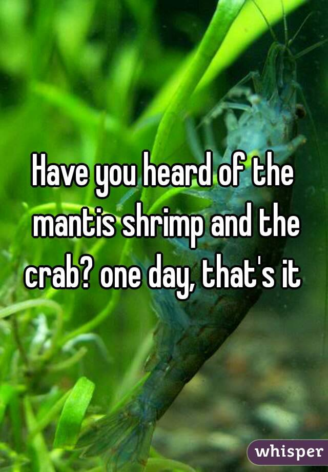 Have you heard of the mantis shrimp and the crab? one day, that's it
