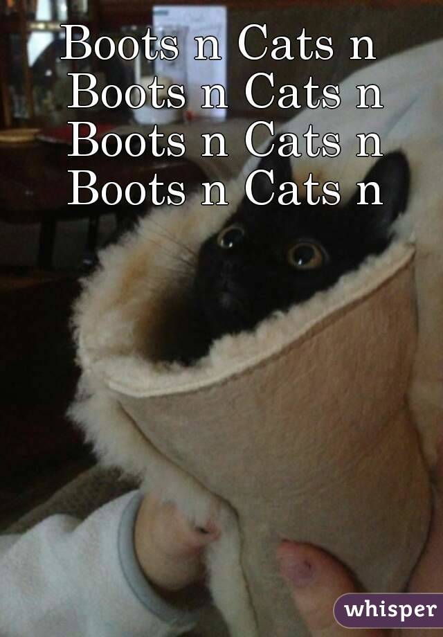 Boots n Cats n Boots n Cats n Boots n Cats n Boots n Cats n