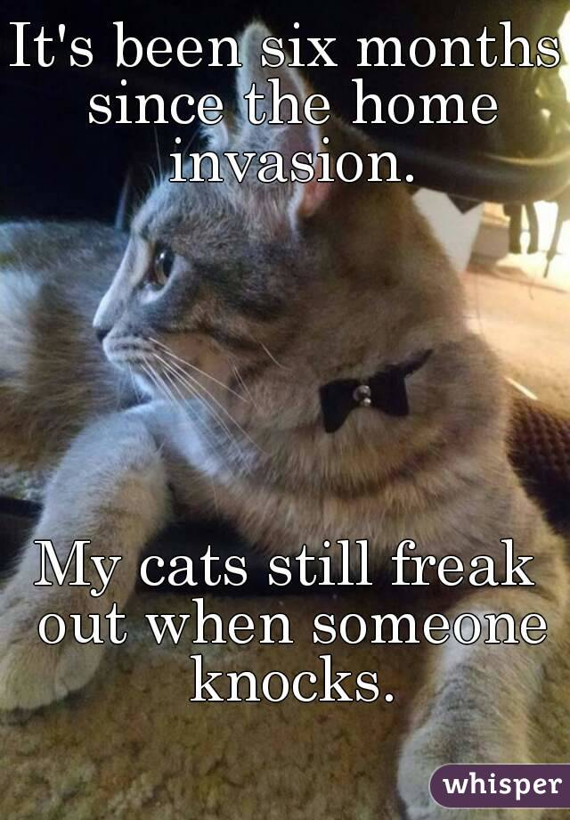 It's been six months since the home invasion.       My cats still freak out when someone knocks.