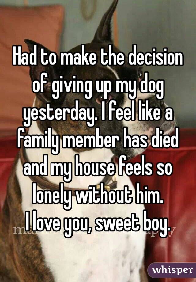 Had to make the decision of giving up my dog yesterday. I feel like a family member has died and my house feels so lonely without him.  I love you, sweet boy.