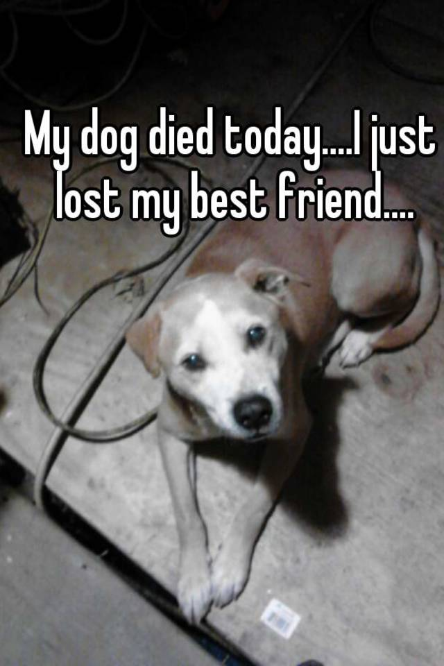 my dog died today i just lost my best friend