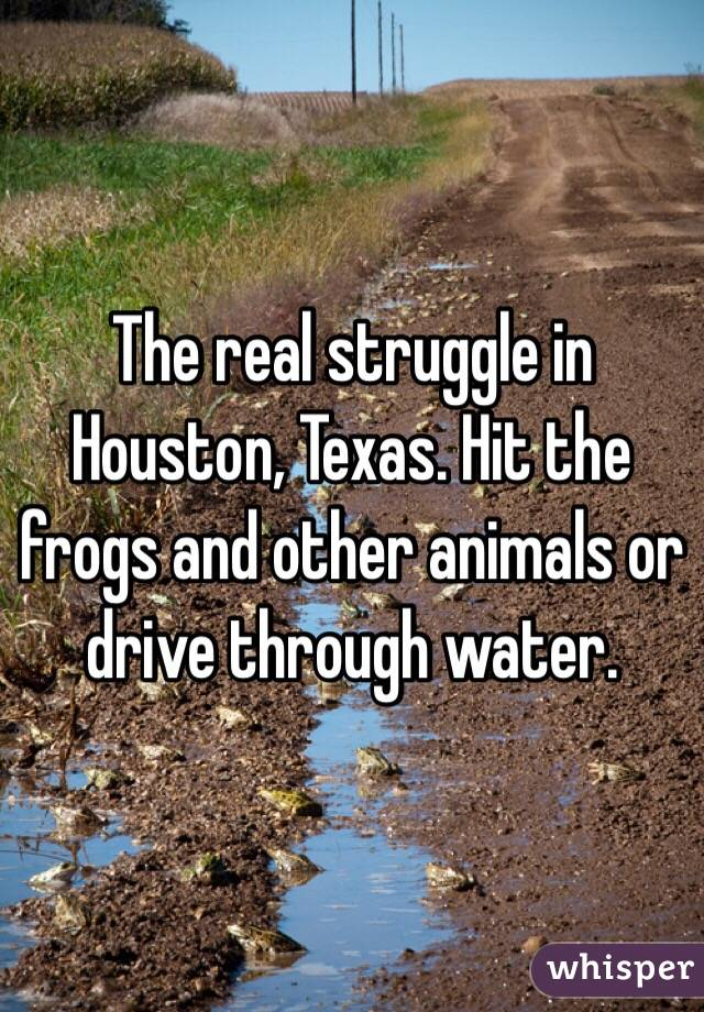 The real struggle in Houston, Texas. Hit the frogs and other animals or drive through water.