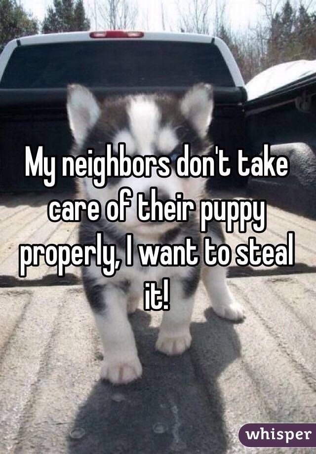 My neighbors don't take care of their puppy properly, I want to steal it!