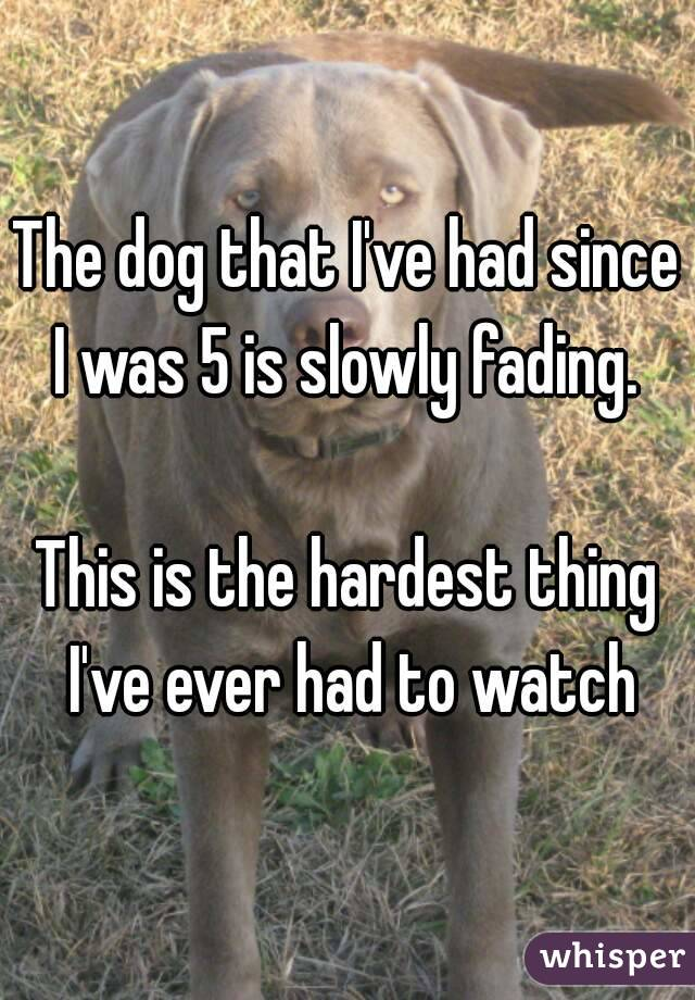 The dog that I've had since I was 5 is slowly fading.   This is the hardest thing I've ever had to watch