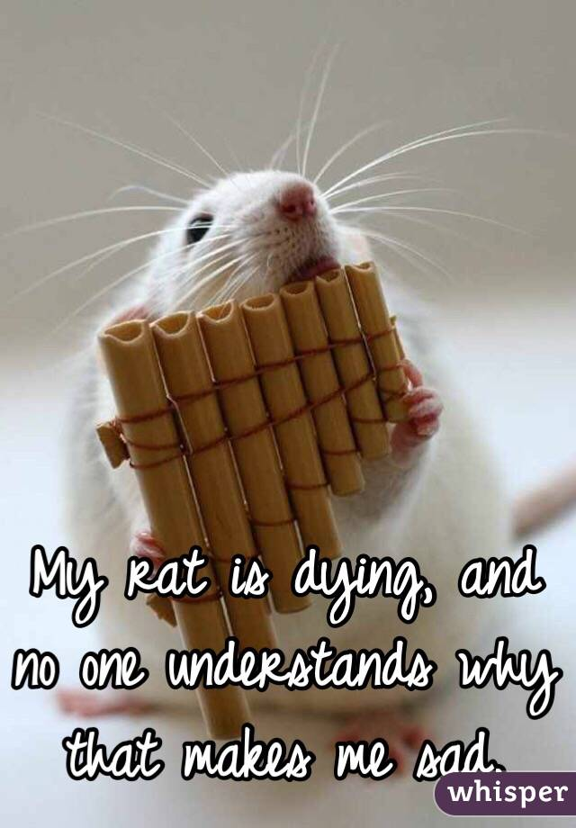 My rat is dying, and no one understands why that makes me sad.