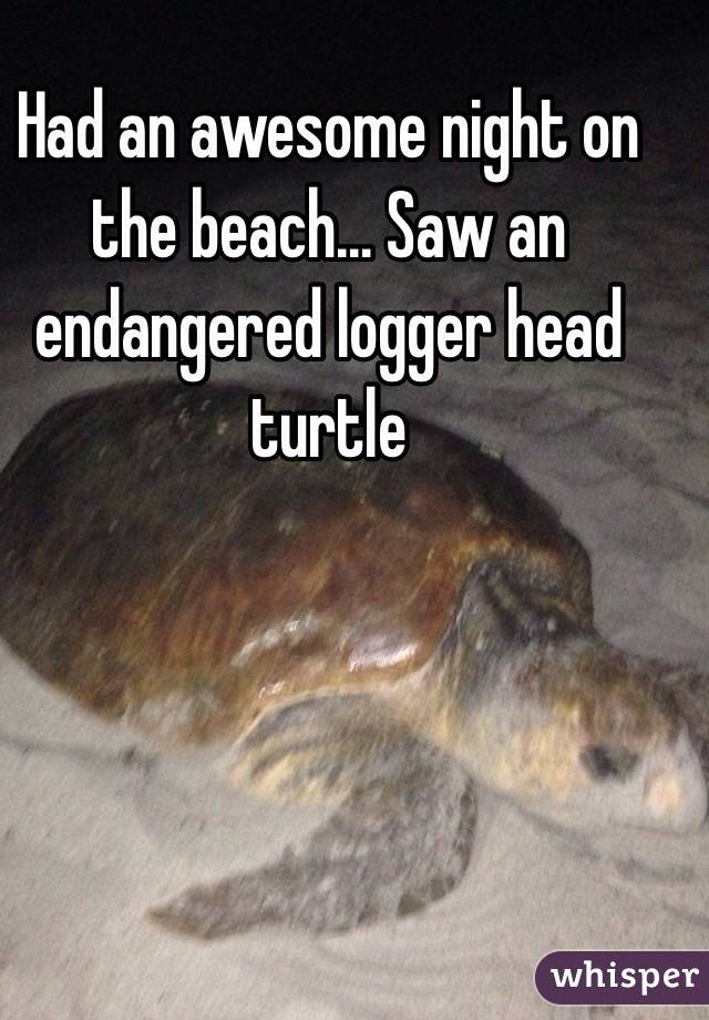 Had an awesome night on the beach... Saw an endangered logger head turtle