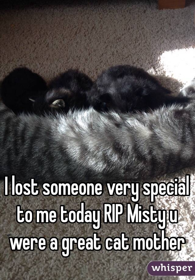I lost someone very special to me today RIP Misty u were a great cat mother