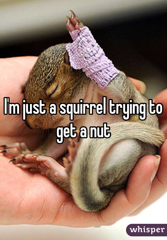 Just a squirrel trying to get a nut
