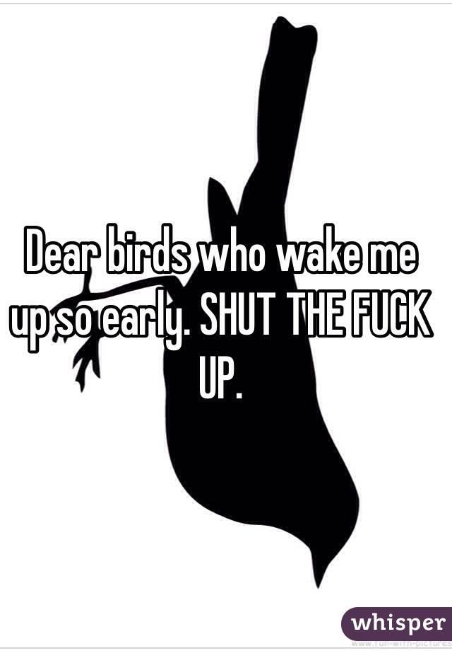 Dear birds who wake me up so early. SHUT THE FUCK UP.