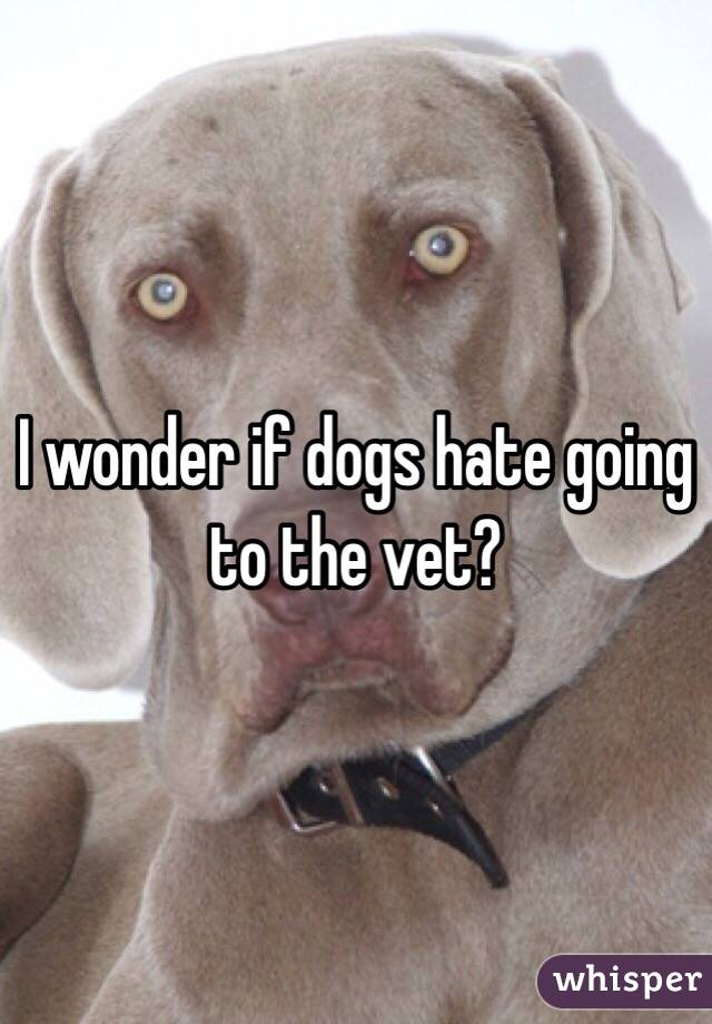 I wonder if dogs hate going to the vet?