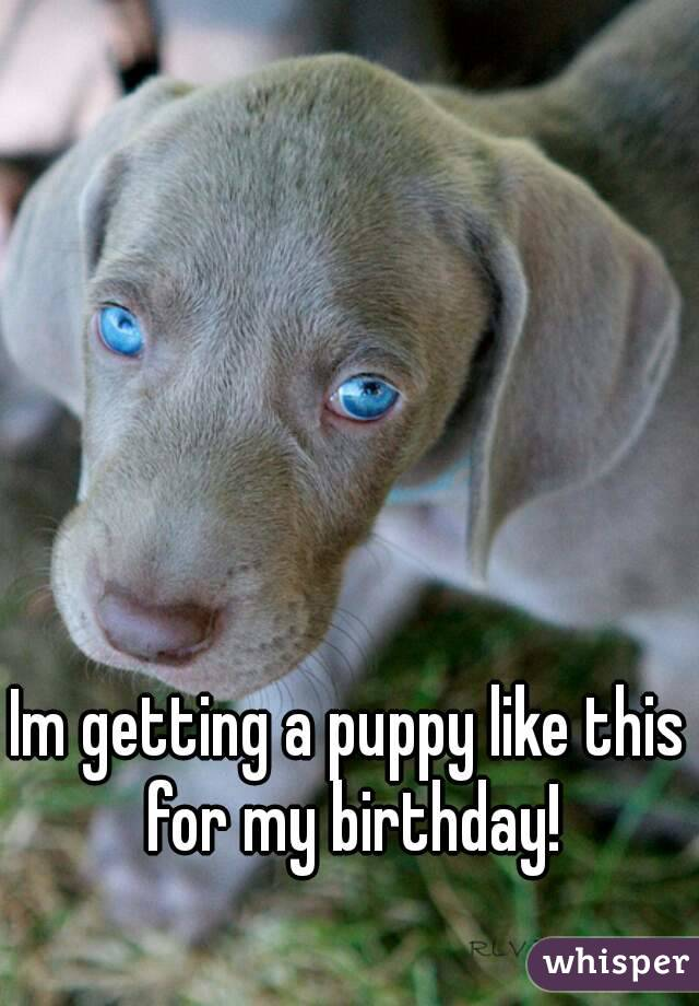 Im getting a puppy like this for my birthday!