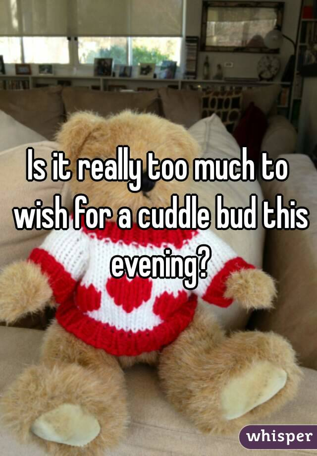 Is it really too much to wish for a cuddle bud this evening?