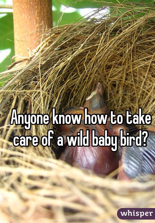 Anyone know how to take care of a wild baby bird?