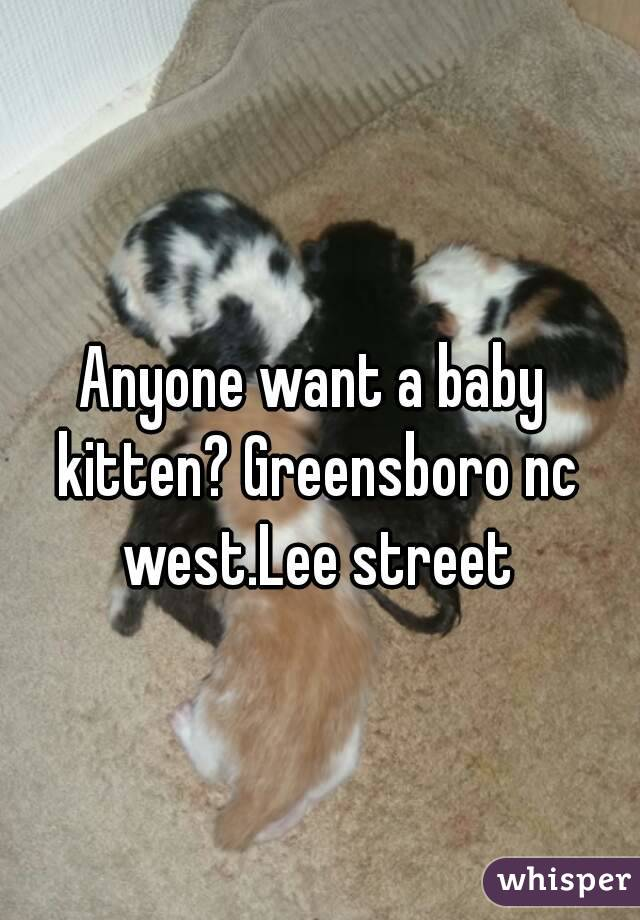 Anyone want a baby kitten? Greensboro nc west.Lee street