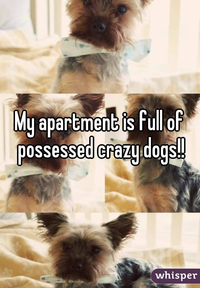 My apartment is full of possessed crazy dogs!!