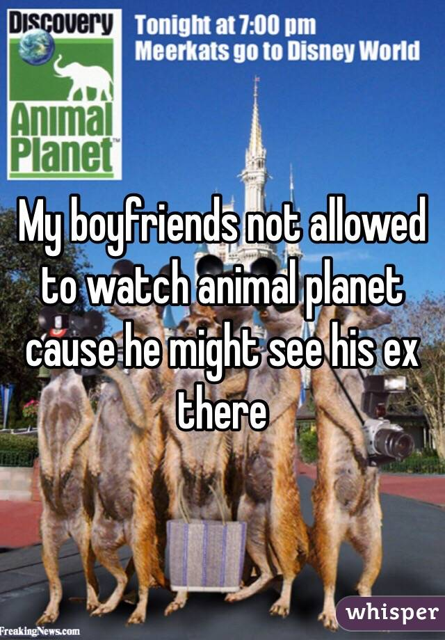 My boyfriends not allowed to watch animal planet cause he might see his ex there