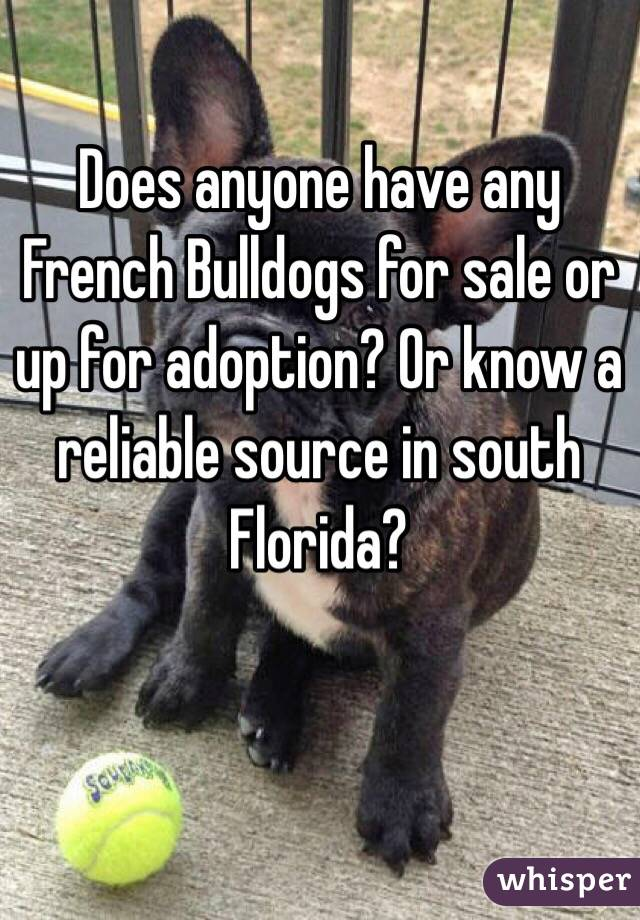 Does anyone have any French Bulldogs for sale or up for adoption? Or know a reliable source in south Florida?