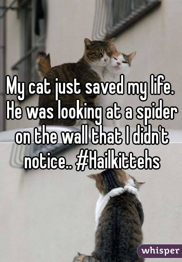 My cat just saved my life. He was looking at a spider on the wall that I didn't notice.. #Hailkittehs