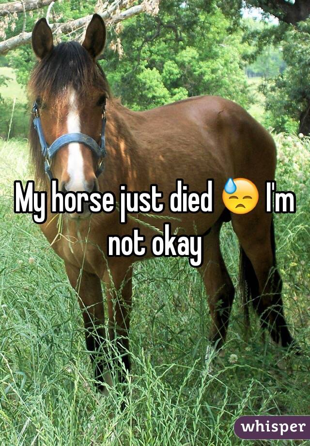 My horse just died 😓 I'm not okay