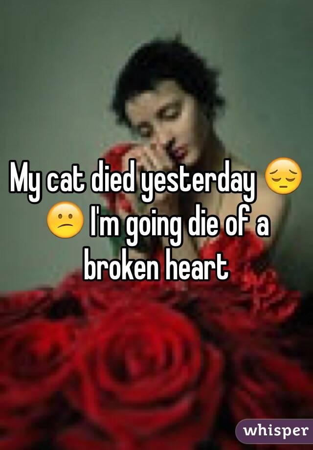 My cat died yesterday 😔😕 I'm going die of a broken heart