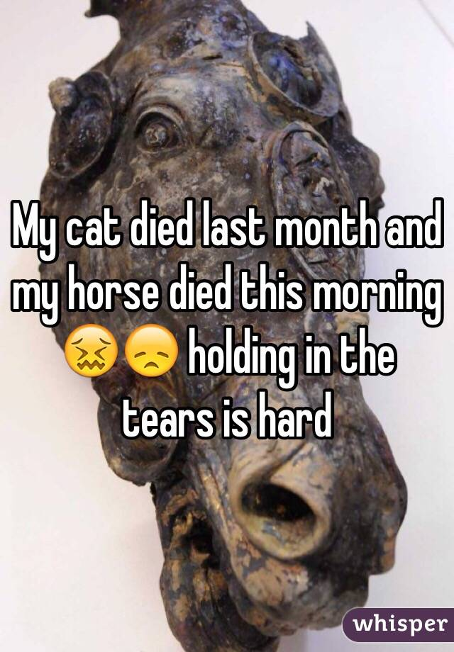 My cat died last month and my horse died this morning 😖😞 holding in the tears is hard