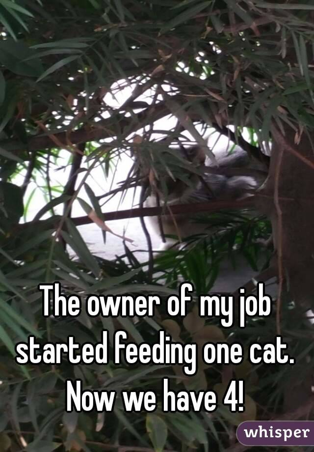 The owner of my job started feeding one cat.  Now we have 4!