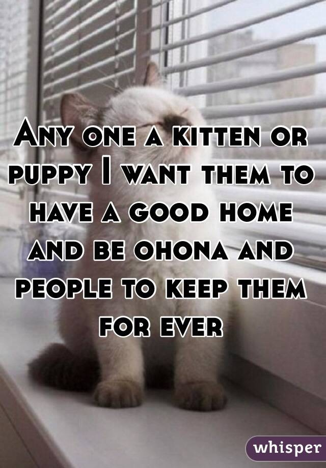 Any one a kitten or puppy I want them to have a good home and be ohona and people to keep them for ever