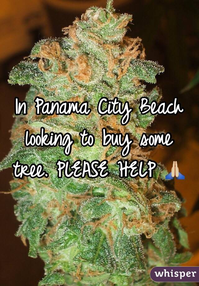 In Panama City Beach looking to buy some tree. PLEASE HELP 🙏🏼