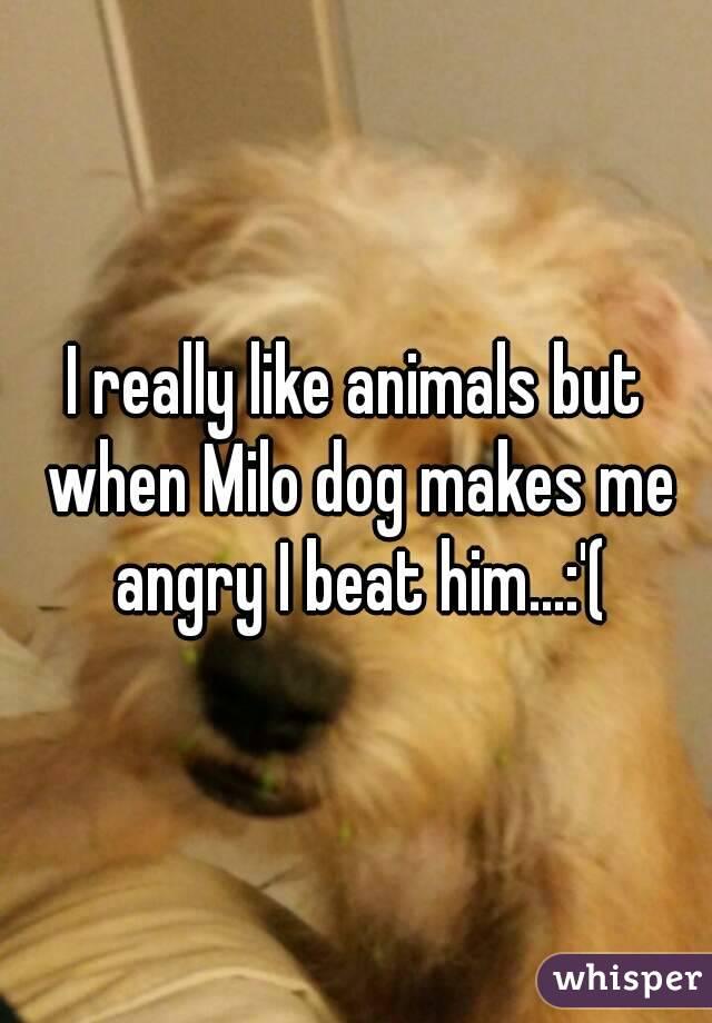 I really like animals but when Milo dog makes me angry I beat him...:'(