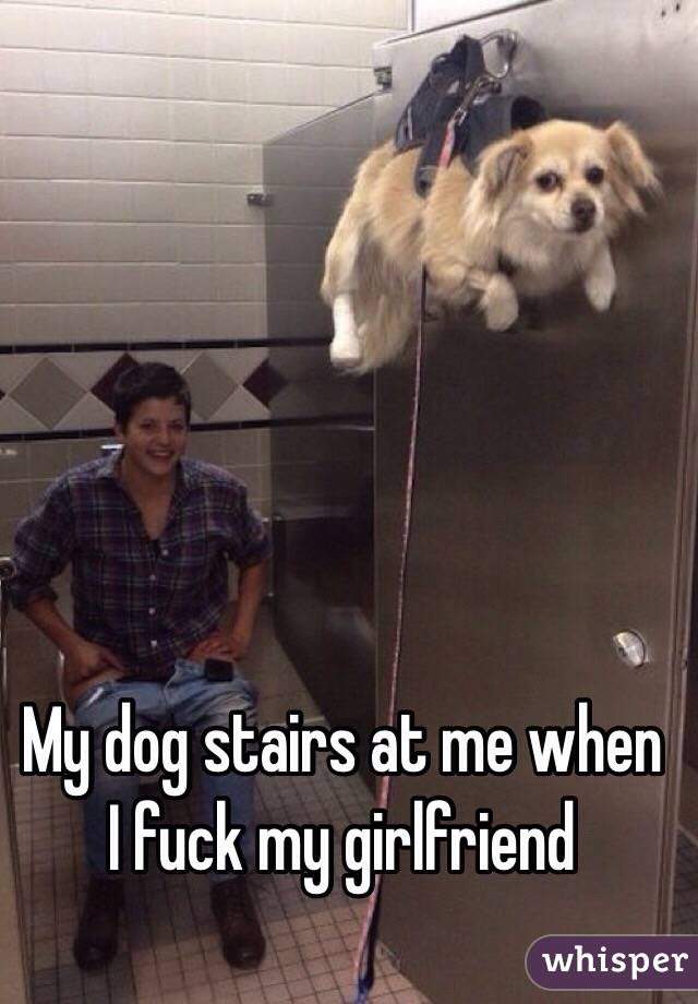 My dog stairs at me when I fuck my girlfriend