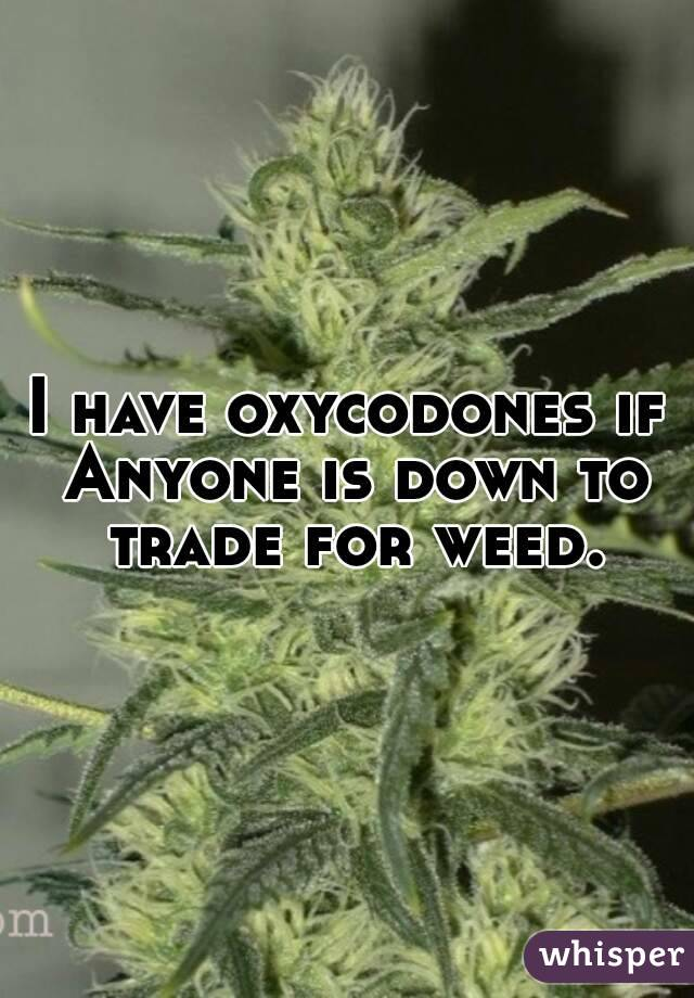 I have oxycodones if Anyone is down to trade for weed.