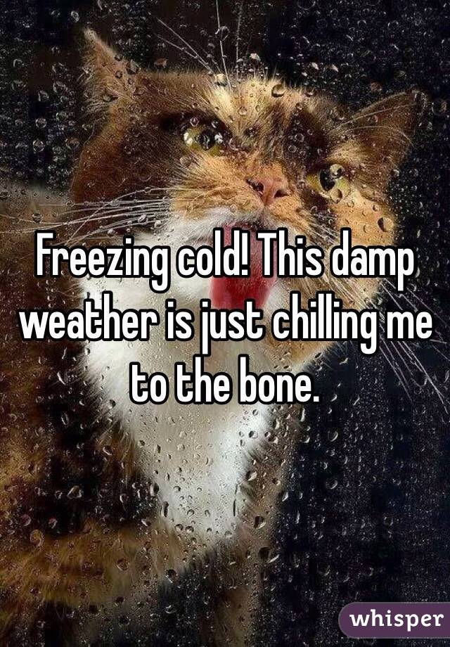 Freezing cold! This damp weather is just chilling me to the bone.