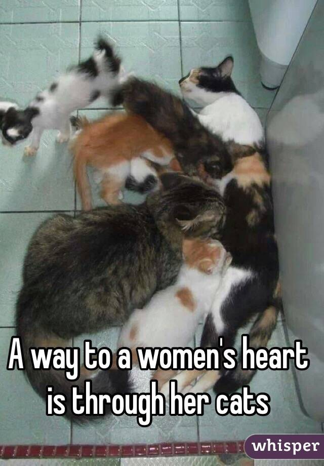 A way to a women's heart is through her cats