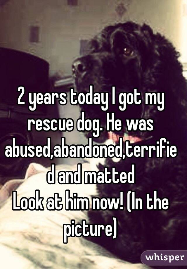 2 years today I got my rescue dog. He was abused,abandoned,terrified and matted  Look at him now! (In the picture)