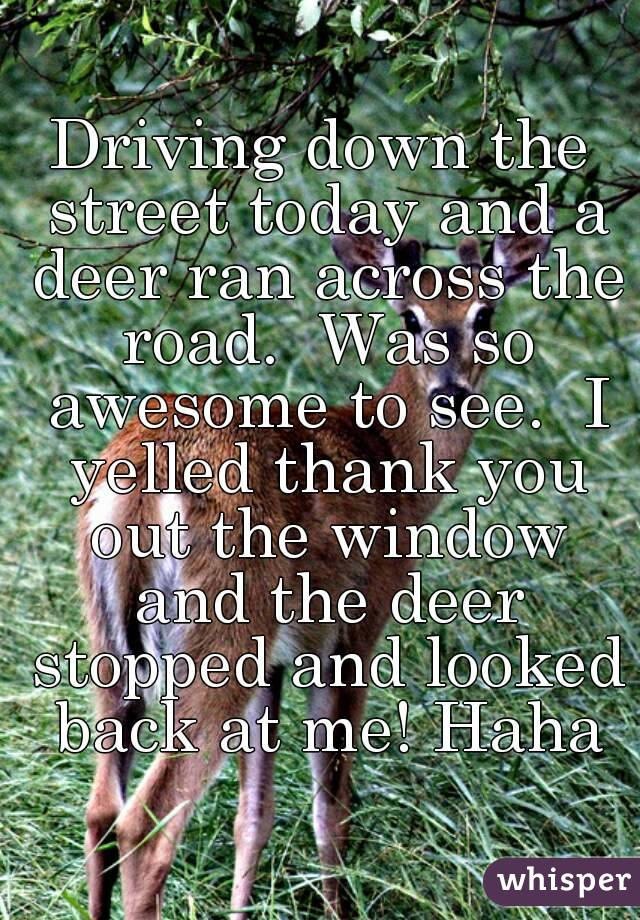 Driving down the street today and a deer ran across the road.  Was so awesome to see.  I yelled thank you out the window and the deer stopped and looked back at me! Haha