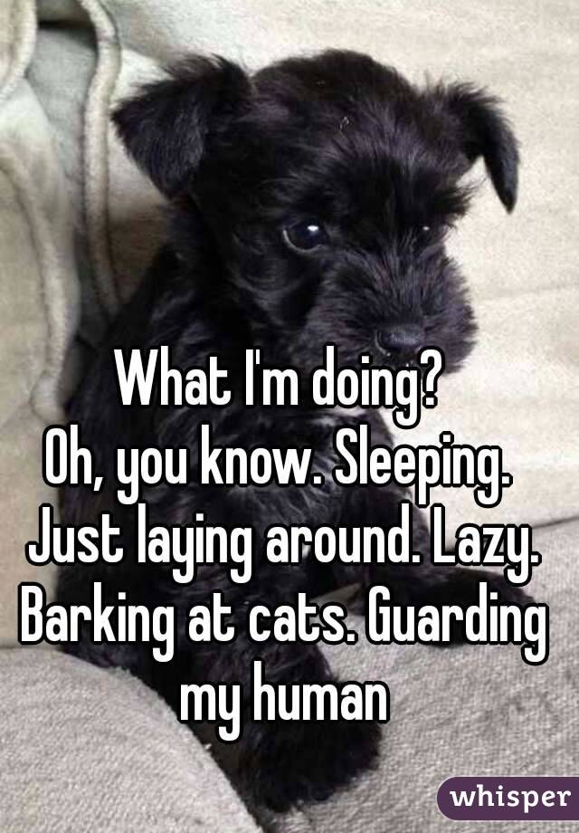 What I'm doing? Oh, you know. Sleeping. Just laying around. Lazy. Barking at cats. Guarding my human