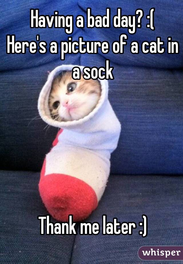 Having a bad day? :( Here's a picture of a cat in a sock      Thank me later :)