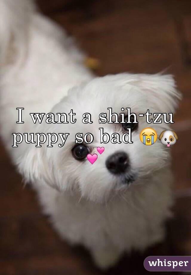 I want a shih-tzu puppy so bad 😭🐶💕