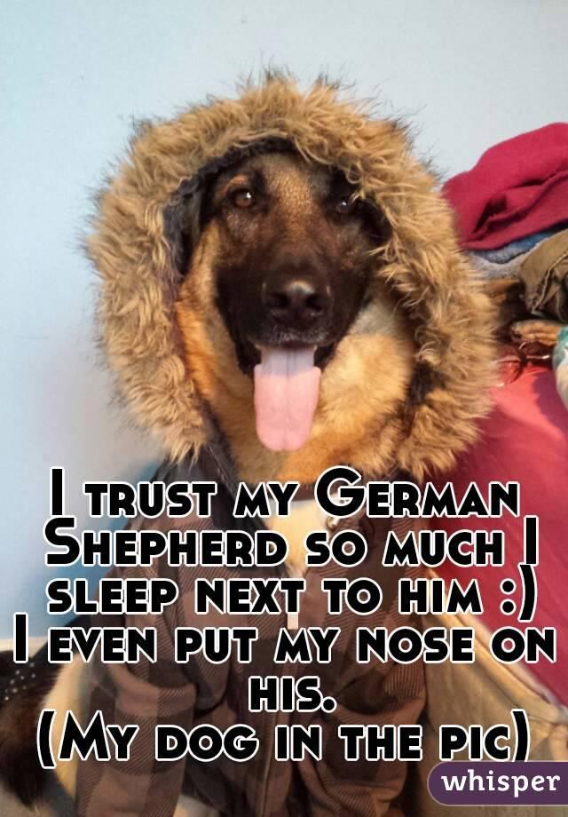 I trust my German Shepherd so much I sleep next to him :) I even put my nose on his. (My dog in the pic)
