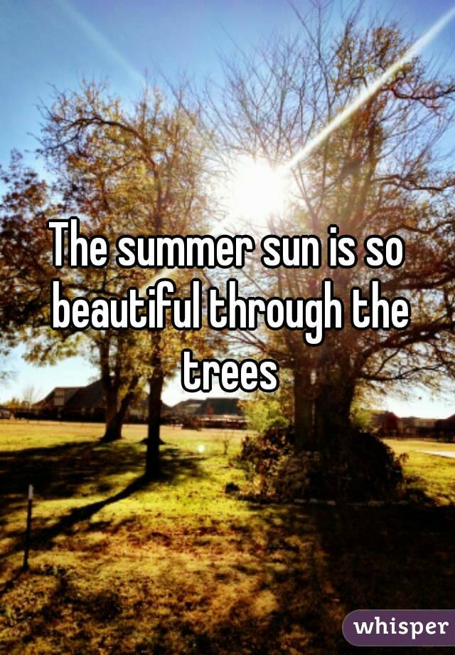 The summer sun is so beautiful through the trees