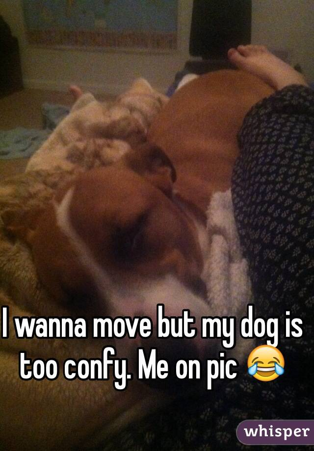 I wanna move but my dog is too confy. Me on pic 😂