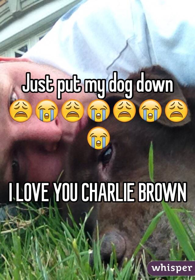 Just put my dog down  😩😭😩😭😩😭😩😭  I LOVE YOU CHARLIE BROWN