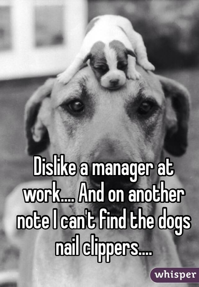 Dislike a manager at work.... And on another note I can't find the dogs nail clippers....